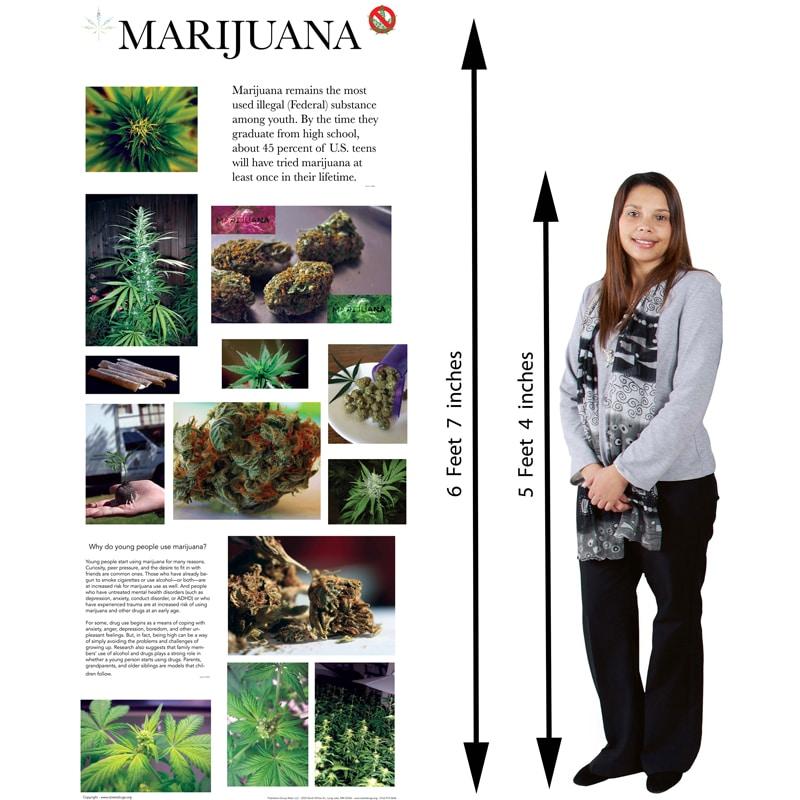 Retractable Marijuana Poster 33.5 x 79